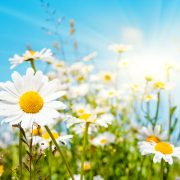 photodune 6066911 flower m